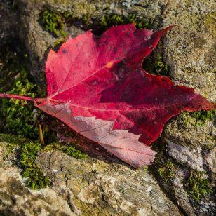 """""""Leaf Season"""""""