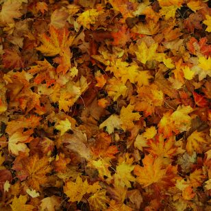 A message from your Public Works Director on Leaf Season